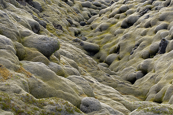 Moss Covered Lava Field, Eldhraun, Iceland