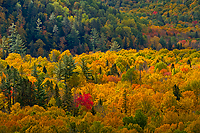 Autumn Forests and Lake Superior Shoreline Tour